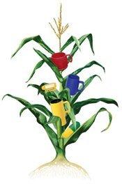 Corn Natural Plastic Stalk